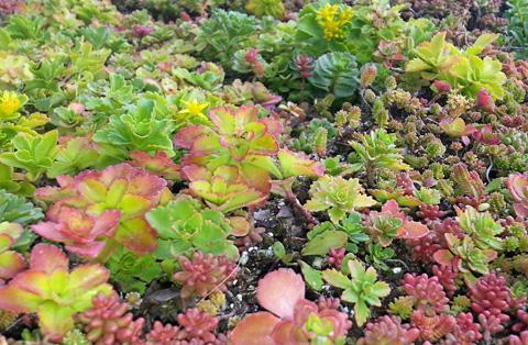 roof plants